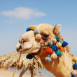 Camel over sky - Foto Stock