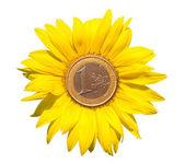 白中心のユーロ硬貨とヒマワリ — ストック写真
