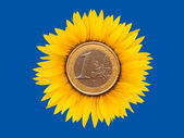 Sunflower-coins — Stockfoto