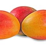Mangoes isolated on white background — Stock Photo