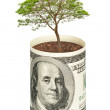 Tree growing from dollar bill — Stock Photo #6629948