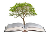 Tree growing from book — Stock Photo
