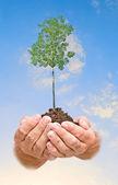árbol en las manos — Foto de Stock