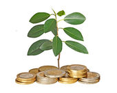Sapling growing from pile of coins — Stock Photo