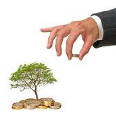 árbol que crece de monedas — Foto de Stock