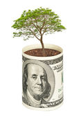 Tree growing from dollar bill — Stok fotoğraf