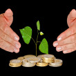 Sapling protectrd by hands - Stock Photo