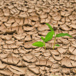 Plant growing from barren land — Stock Photo