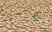 Terre aride au summer — Photo