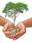 Palms with a tree growng from pile of coins — Stock Photo