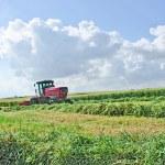 Harvest — Stock Photo