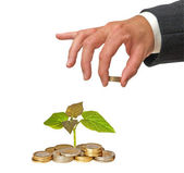 Paulownia sapling growing from coins — Stock Photo