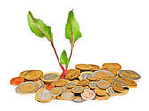 Beetroot growing from money — Stock Photo