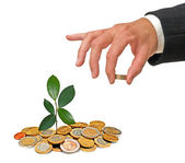 Sapling growing from coins — Stock Photo