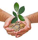 Palms with a sapling growng from pile of coins — Stock Photo