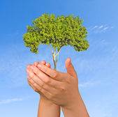 Tree in palms as a symbol of nature protection — Stock Photo