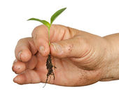 Hand with a seedling — Stock Photo