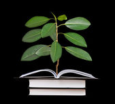 Sapling growing from opem book — Stock Photo