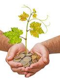 硬貨から成長しているブドウ — ストック写真
