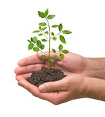 Sapling in hands — Foto de Stock