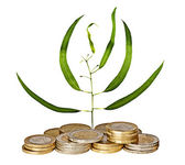Eucaliptus sapling growing from pile of coins — Stock Photo