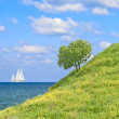 Stock Photo: Tree on coastal meadow