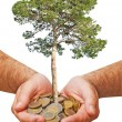 Stock Photo: Palms with tree growng from pile of coins