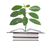 Sapling growing from open book — Stock Photo