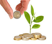 Citrus sapling growing from coins — Stock Photo