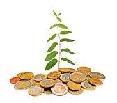 Plante poussant des tas de pièces de monnaie — Photo