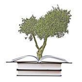 Olive tree growing from book — Stock Photo