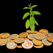 Mint growing from coins - Stok fotoğraf