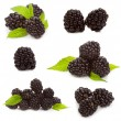 Set with  blackberries - Stock Photo
