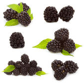 Set with blackberries — Stock Photo