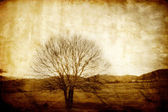 Vintage tree background — Stock Photo