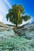Rime landscape — Stock Photo