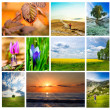 Stock Photo: Nature collage
