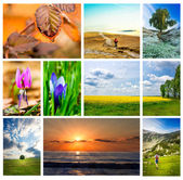 Nature collage — Stock Photo