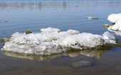 Ice-floe on river — Stock Photo