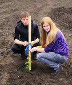A guy and a girl planted tree — Stock Photo