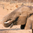 Stock Photo: Elephant drinking water