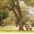 Bench under a tree in a park — Stock Photo