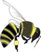 Bee Vector — Stock Vector