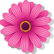 Beautiful pink Gerber Daisy — Stock Vector #5708503