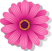 Beautiful pink Gerber Daisy — Stock Vector