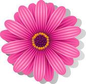 Beautiful pink Gerber Daisy — Stock Vector