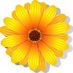 Beautiful yellow Gerber Daisy — Stock Vector #5744191