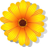 Beautiful yellow Gerber Daisy — Stock Vector