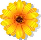 Beautiful yellow Gerber Daisy — Stock Vector