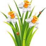 Daffodils — Stock Vector #5932137